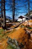 Chalet della montagna e larice delle spine Fotografia Stock Libera da Diritti