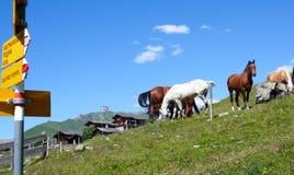 Chalet di legno pittoreschi della montagna nelle alpi svizzere un bello giorno di estate con i cavalli e un indicatore giallo del immagine stock