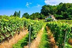 Chalet en Lavaux-Wijngaard wandelingssleep van Zwitser stock foto's