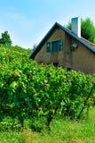 Chalet en Lavaux-Wijngaardterrassen die het district van sleep lavaux-Oron in Zwitserland wandelen stock afbeeldingen