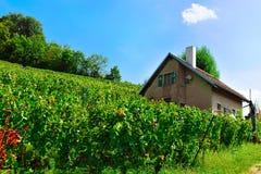 Chalet en Lavaux-Wijngaardterrassen die sleep wandelen stock afbeeldingen