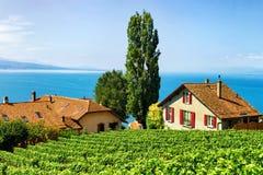 Chalet svizzeri sulla traccia di escursione dei terrazzi della vigna di Lavaux Switze Fotografie Stock