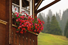Chalet in the Swiss Alps. A quaint chalet in the Swiss Alps, with colorful flowers in the window and a mountain meadow and pine trees in the background Royalty Free Stock Photo