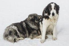 Chalethunde im Winter stockfotos