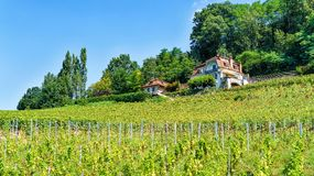 Chalets on Lavaux Vineyard Terraces of Lavaux Oron Switzerland Royalty Free Stock Images