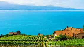 Chalets near Vineyard Terrace hiking trail of Lavaux in Switzerl. Chalets near Vineyard Terrace hiking trail of Lavaux, Lake Geneva and Swiss mountains, Lavaux Royalty Free Stock Photography