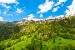 Chalets On Green Mountain Slope. Swiss Alps. Lauterbrunnen, Swit Royalty Free Stock Photo
