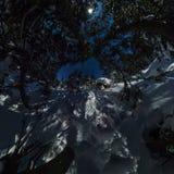 360 chalets y snowboard del panorama en bosque del invierno debajo de una estrella Fotos de archivo libres de regalías