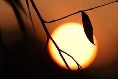 Chaleur et risque. Réchauffement global Image libre de droits