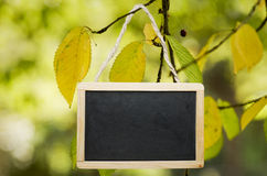 Chalk board. Black chalk board hanging from a tree Royalty Free Stock Image