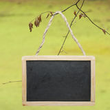 Chalk board hanged on tree Royalty Free Stock Images