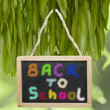 Chalk board hanged on tree with Back To School written on it Royalty Free Stock Images