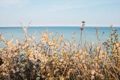 Flowers on the Chalk cliffs Mons Klint Denmark royalty free stock photos