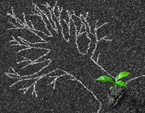 Chalk contour of tree on asphalt road and young growth concept Royalty Free Stock Photography