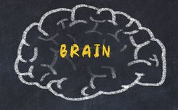 Chalk drawing of human brain with inscription brain.  royalty free stock images