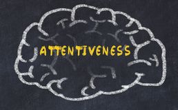 Chalk drawing of human brain with inscription attentiveness.  stock photos