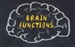 Chalk drawing of human brain with inscription brain functions.  royalty free stock image