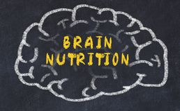 Chalk drawing of human brain with inscription brain nutrition.  stock photo