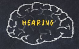 Chalk drawing of human brain with inscription hearing.  stock image