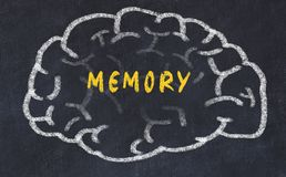 Chalk drawing of human brain with inscription memory.  royalty free stock photos