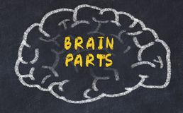 Chalk drawing of human brain with inscription brain parts.  stock photo
