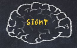 Chalk drawing of human brain with inscription sight.  royalty free stock images