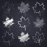 Chalk drawn maple leaf on chalkboard background. Set of chalk drawn maple leaves on chalkboard background. Sketch of maple leaf stock illustration