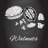 Chalk drawn sketch walnuts vector Black and white kitchen art. Kitchen decor, rustic background, Healthy cooking ingredients, Healthy snack Healthy diet Royalty Free Stock Images