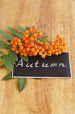 Chalk inspiration Autumn and branch of rowan. Chalk cursive inspiration Autumn with orange rowan on wooden background Royalty Free Stock Image