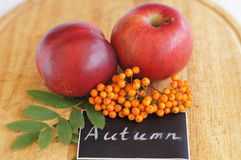 Chalk inspiration Autumn and branch of rowan and red apples Royalty Free Stock Photo