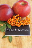 Chalk inspiration Autumn and branch of rowan and red apples Royalty Free Stock Image