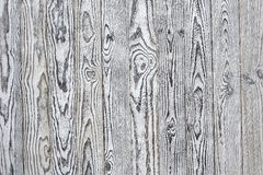 Chalk painted White pine wood texture royalty free stock image