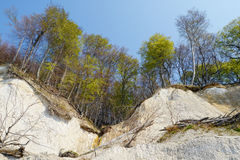 Chalk rock cliff of Rugen Island Germany in springtime. stock photos