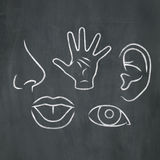 Chalk 5 Senses. Hand-drawn illustration of the five senses in white chalk on a blackboard background Royalty Free Stock Image