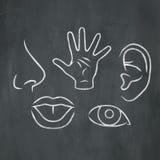 Chalk 5 Senses royalty free illustration