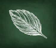 Chalk sketch of basil Stock Images
