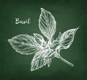 Chalk sketch of basil Stock Photos