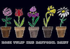 Chalk sketch of flowers in pots Royalty Free Stock Images