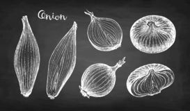 Chalk sketch of onion. On blackboard background. Hand drawn vector illustration. Retro style vector illustration