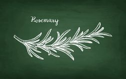 Chalk sketch of rosemary branch Royalty Free Stock Image