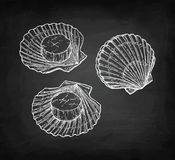 Chalk sketch of scallops Stock Image