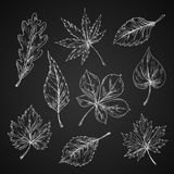 Chalk sketches of leaves silhouettes Royalty Free Stock Photography