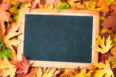 Chalkboard  on autumnal leaves Stock Photos