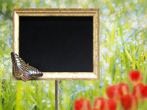 Chalkboard with butterfly Stock Photos