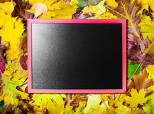 Chalkboard on fall autumn leaves background Stock Images