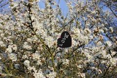 Chalkboard miłości kierowy kwiat Zdjęcia Stock