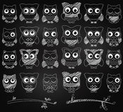 Chalkboard Style Vector Set of Cute Owls Stock Image