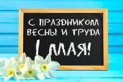 Chalkboard with the text in Russian: with the holiday of spring and labor, 1 May. White flowers of daffodils on a blue wooden tabl. E Stock Image