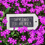 Chalkboard with the text spring is here. Closeup of a label-shaped chalkboard with the text spring is here placed between many pink wildflowers Royalty Free Stock Photography