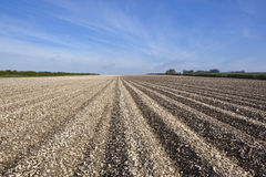 Chalky arable landscape. Arable landscape with the patterns and textures of potato rows on the chalky limestone soil of the yorkshire wolds under a hazy blue sky Royalty Free Stock Photography